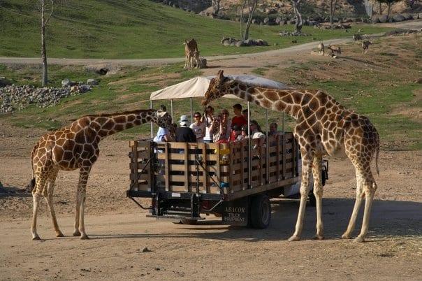 Onde comprar ingressos para o San Diego Zoo em San Diego