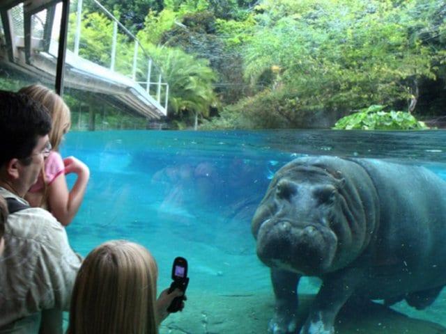 Zoológico San Diego Zoo em San Diego
