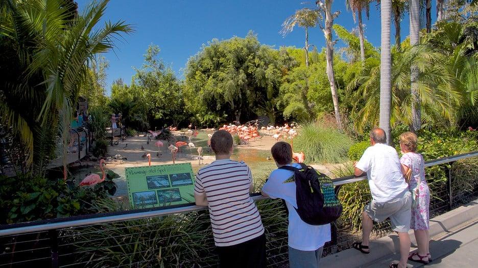 Sobre o San Diego Zoo em San Diego