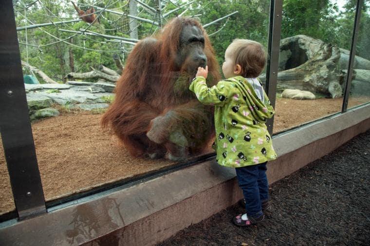 Como chegar ao San Diego Zoo em San Diego