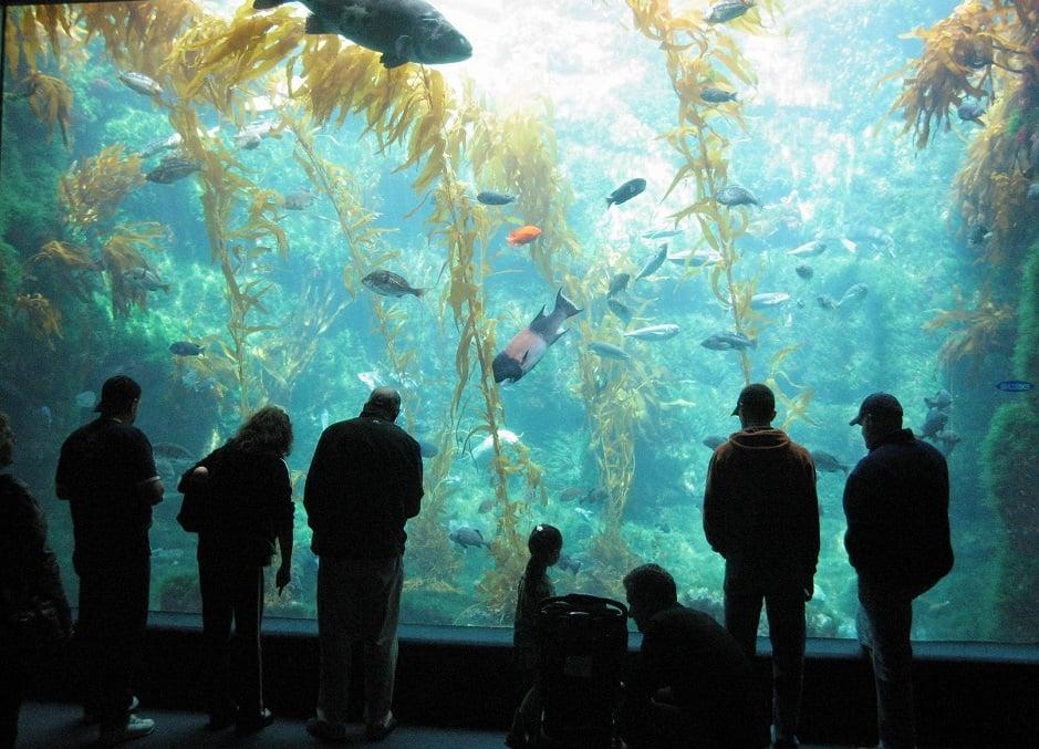 Atrativos no Birch Aquarium em La Jolla