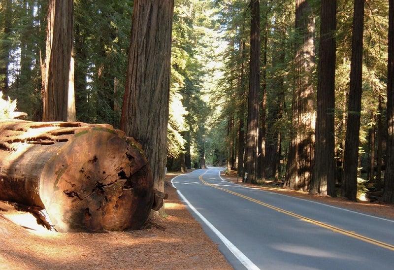 Leis para dirigir na Califórnia