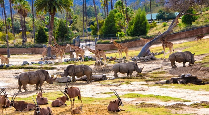 Zoo Safari Park em San Diego na Califórnia
