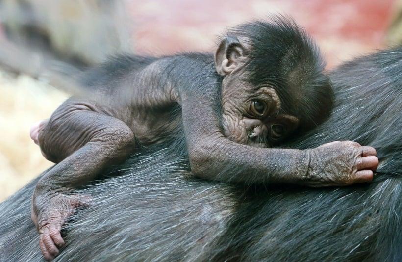 Mata das Américas no Zoológico de Los Angeles