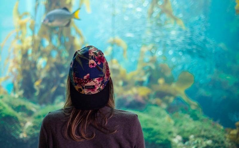 Informações sobre o Monterey Bay Aquarium em Monterey