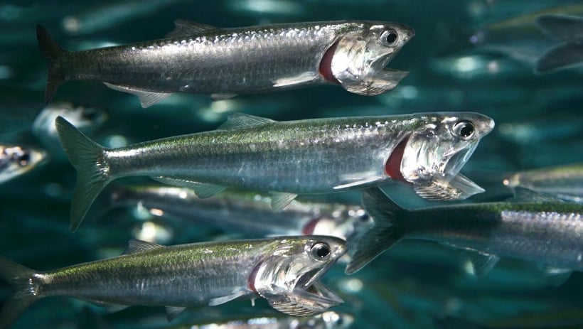 Feed The Fish no Monterey Bay Aquarium na Califórnia