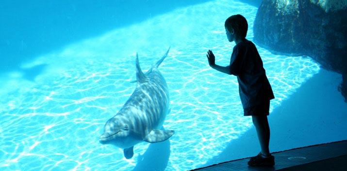 Monterey Bay Aquarium em um roteiro em San Francisco