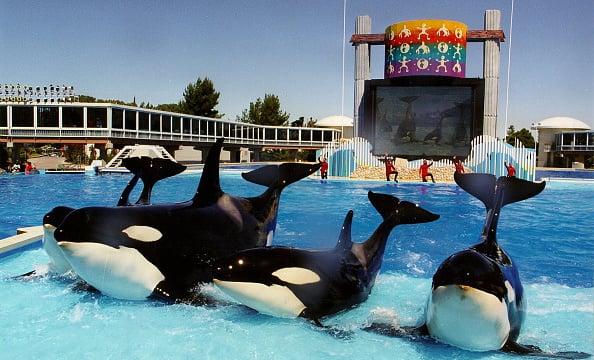 Parque SeaWorld San Diego