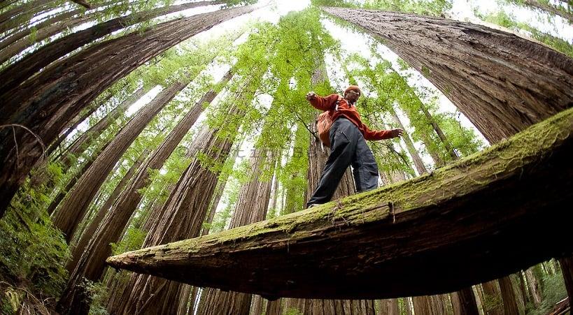 Atrativos no Parque Nacional de RedWood na Califórnia
