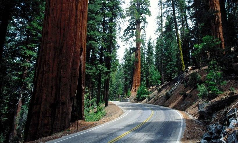 Visita ao Parque Nacional de RedWood na Califórnia
