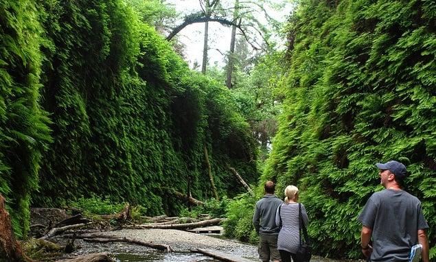 Parque Nacional de RedWood na Califórnia