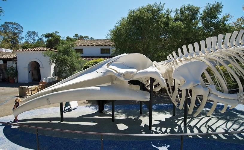 Santa Bárbara Museum of Natural History Sea Center em um roteiro de viagem em Santa Bárbara