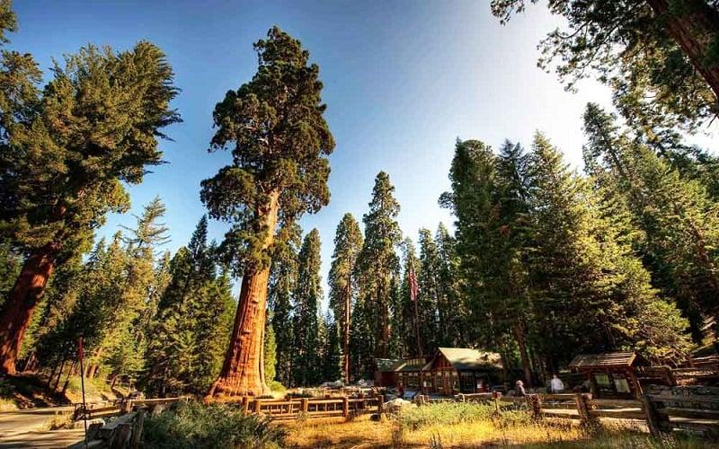 Visita ao Parque Nacional da Sequoia na Califórnia