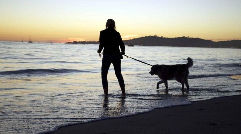 Animais de estimação na Arroyo Burro County Beach Park em Santa Bárbara