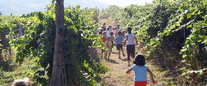 O que fazer com criança em Napa Valley
