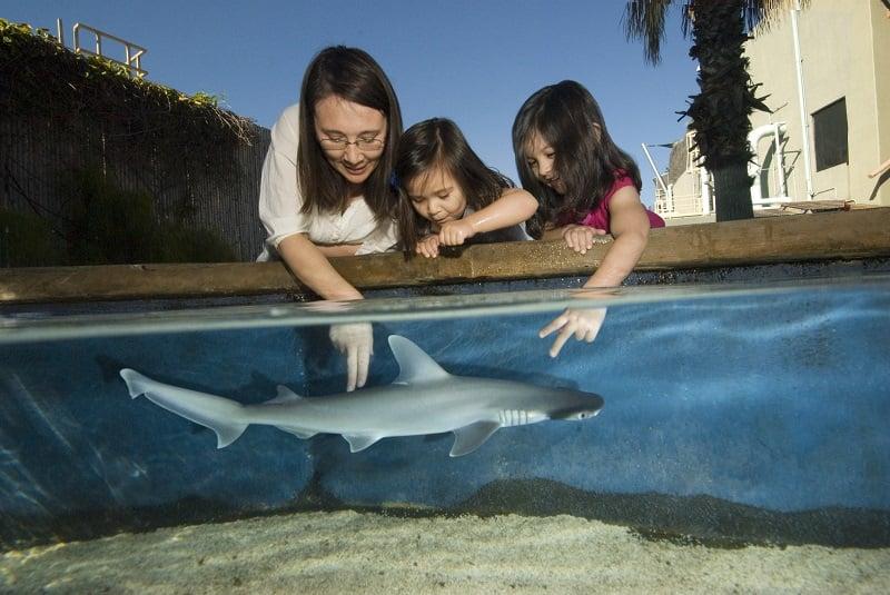 Ir com criança no Aquário do Pacífico em Long Beach
