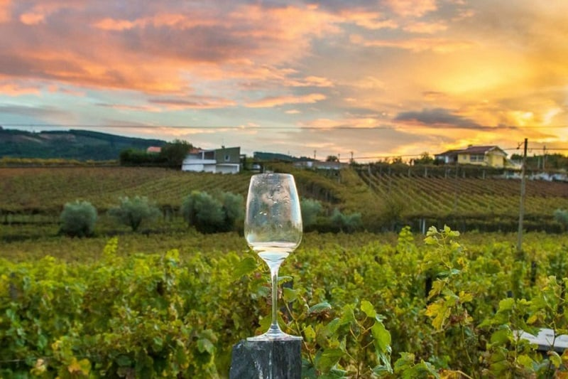 Noite com degustação de vinho em Napa Valley