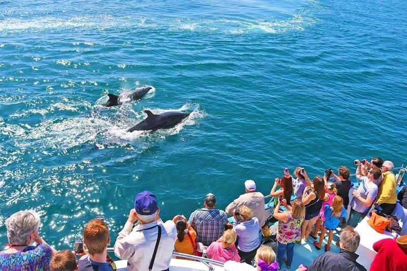 Davey's Locker para ver as baleias com criança em Newport Beach